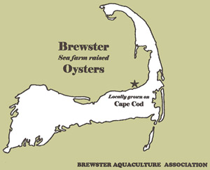 Brewster Oysters are proudly farm-raised by the Brewster Aquaculture Association